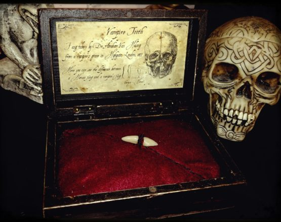 Vampire's tooth into woodenbox