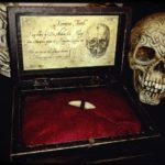 "Vampire's tooth into woodenbox ""wunderkammer"""
